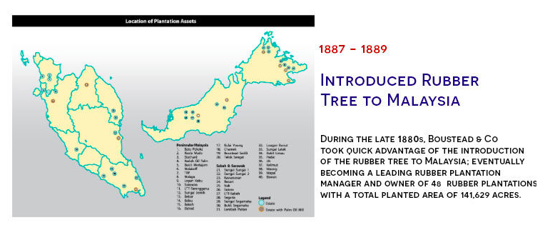 Boustead rubber tree in Malaysia